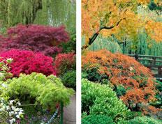 Zwerg japanische schönheiten seite